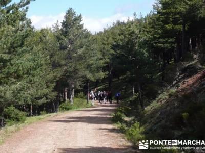 Ruta de Senderismo - Altos del Hontanar; bosque encantado urbasa